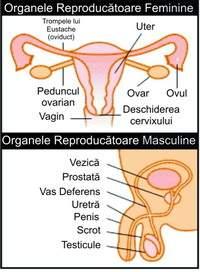 Semne si simptome ale menopauzei | menopauza.bucovinart.ro