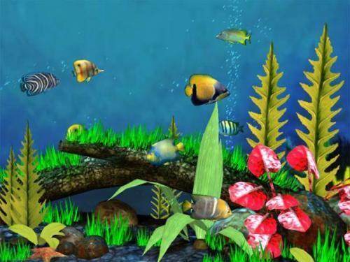 Download fish aquarium 3d screensaver 1 1 - Fond aquarium 3d ...